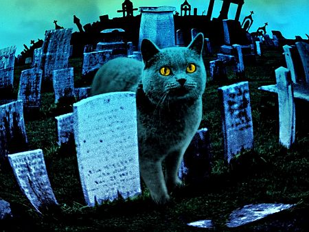 stephen king | pet sematary
