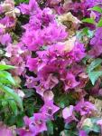 Турецкие цветы (1)