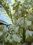 Турецкие цветы (2)
