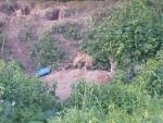 Дубковские лисы