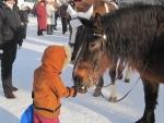 Суздаль 2010. Лошадки очень любят сахар.