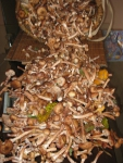 Грибы, грибочки