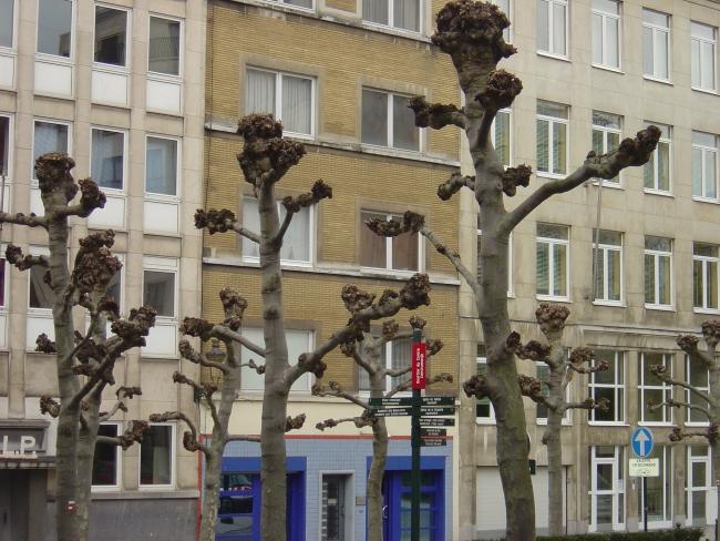 Брюссель. Деревья?
