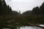 вырубка дубковского леса