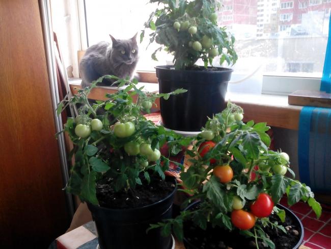 Моё балконное чудо)))