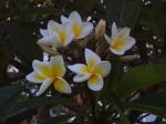 Цветы -2