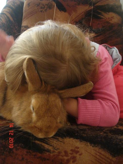 Любимый кролик Арсенька