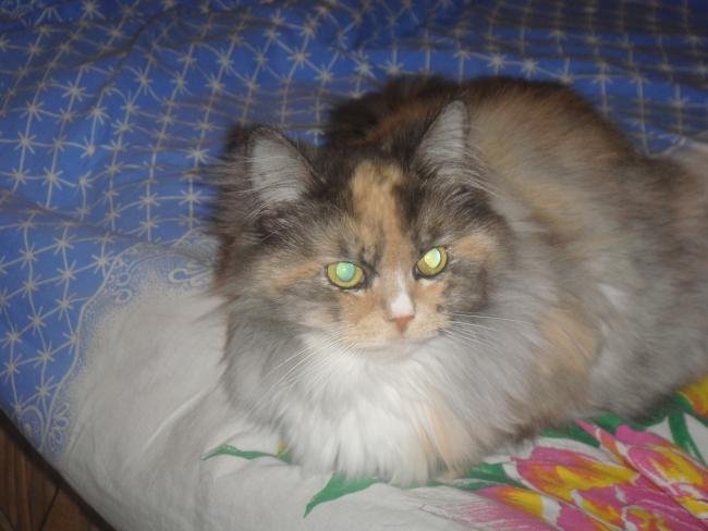Моя кошка