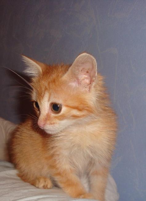 Котёнок4