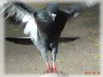 Безумная птица - 2