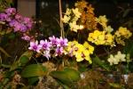 Орхидея -4