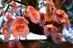 Орхидея -7