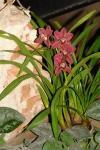 Орхидея -9