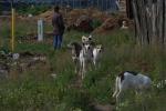 Бездомные собаки ВНИИССОК