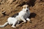 Бездомные собаки поселка ВНИИССОК