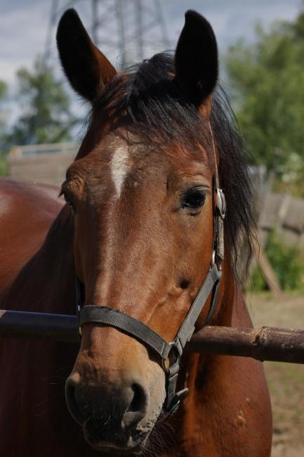 Домашние лошади поселка ВНИИССОК