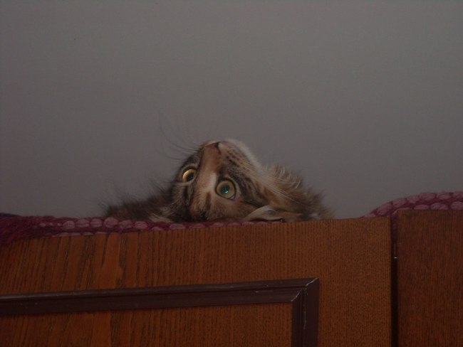 Муха на потолке...