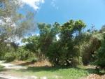 Джунгли в парке