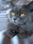 Мой котик