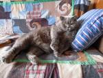 Люблю спать на подушке