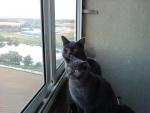 Как интересно смотреть в окно