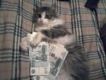 Новогодняя кошка. Год кота/кролика