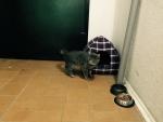 Кот ищет хозяев...