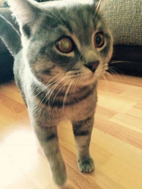 Найден кот... Help!