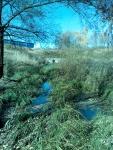 И течёт себе вода из Дубковского пруда...