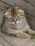 деревенские котики. мамаша