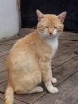 деревенские котики. рыжий друг 2