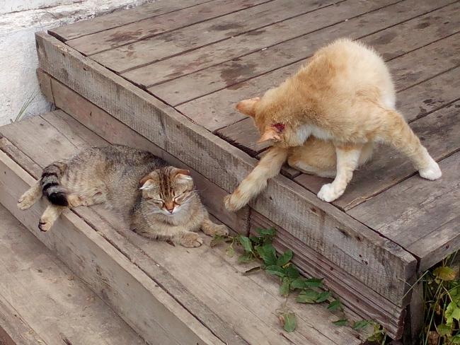 деревенские котики. мамаша-2 и ейный друк