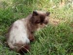 деревенские котики. чудо в перьях-2