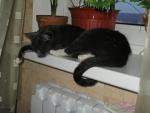 Бедный зимний уставший котэ