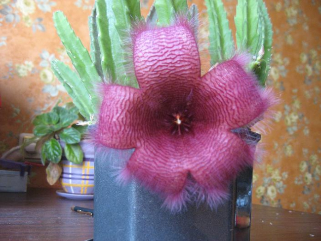 Красивый цветок к особому дню