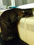 И мой котище на батарее)
