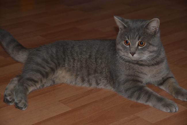кому кота? )