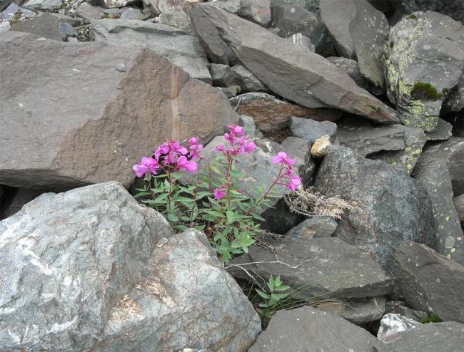 Нежность побеждает камень