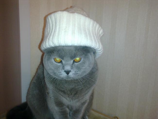 очень суровый кот!