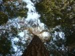 вот такие деревья в парке Архангельского