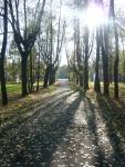 в парке 3