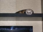 Почти летучая мышь, почти что сволочь ))