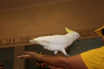 Попугай 8.