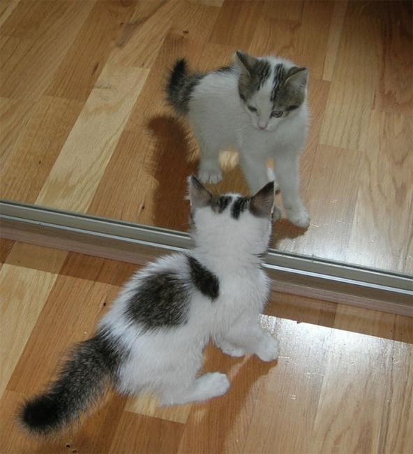 Сражение с отражением