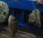 Рыбка из докризисного прошлого