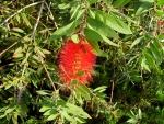 Цветок непонятного греческого кустика