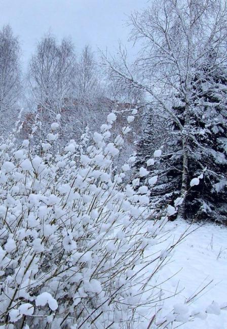 Работы Клары. Снежный куст