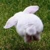 Аватар пользователя zajac